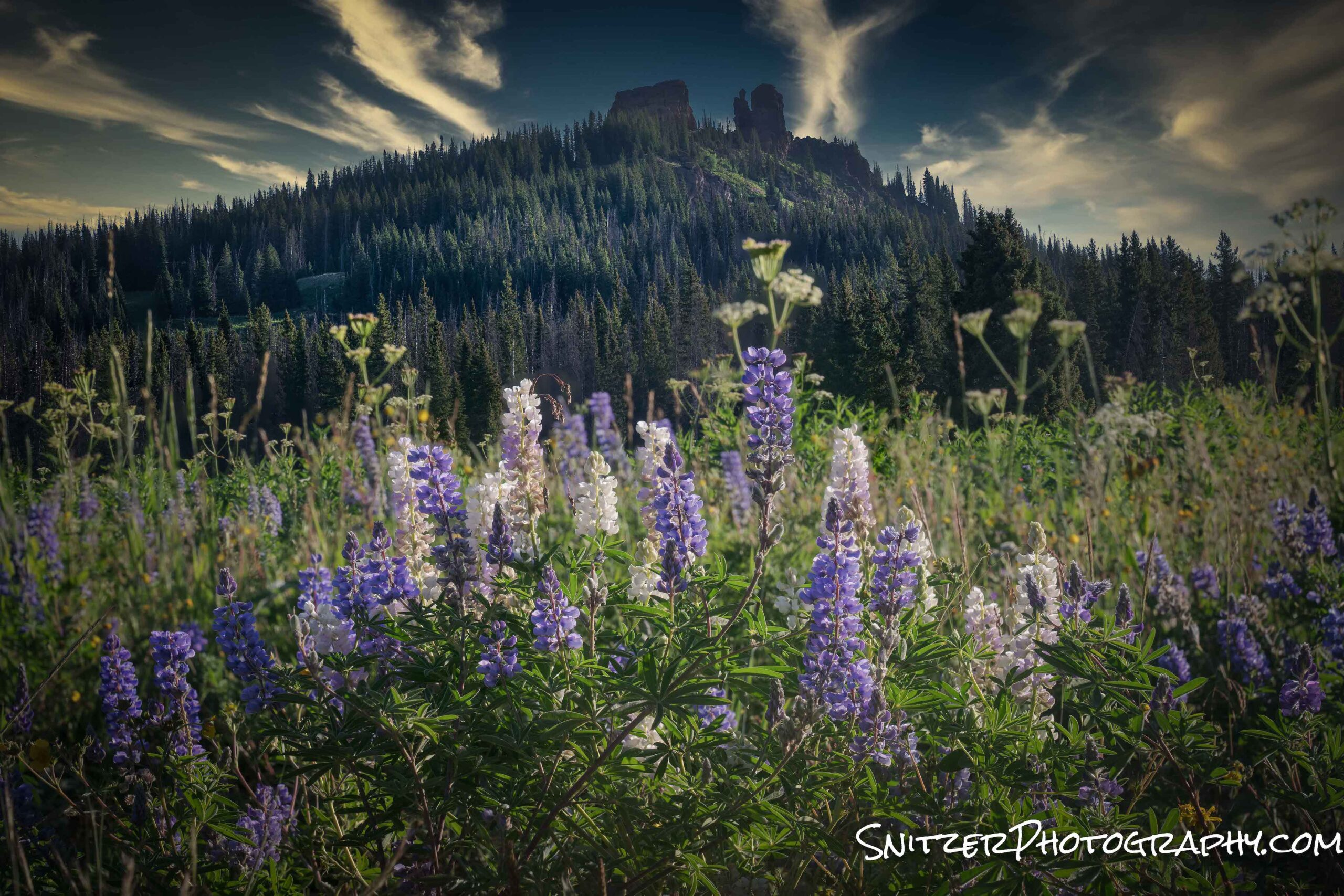 Steamboat Wildflower Invasion