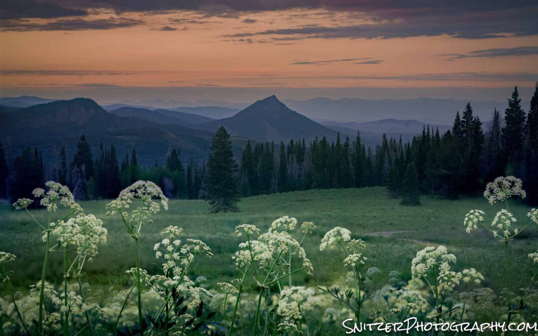 Wildflower Explosion in Colo's Rockies